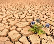 'Küresel ısınma tehlikeli sonuçlara yol açabilir'